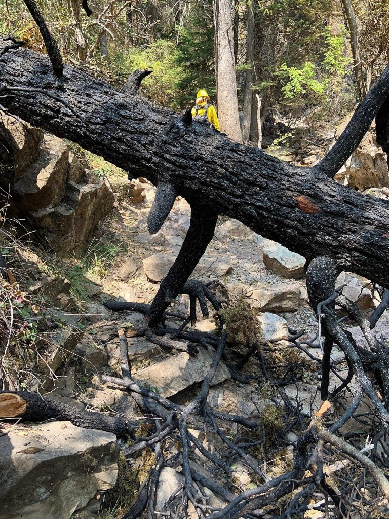 A charred, fallen tree lies over the Hanging Lake Trail.