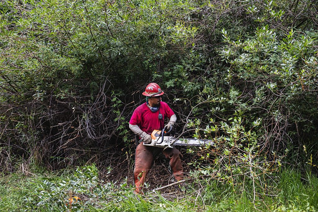 A crew member of the State Wildland Inmate Fire Team from the Rifle Correctional Center clear out dead trees and forest floor debris in Snowmass Village on Wednesday, August 5, 2020. (Kelsey Brunner/The Aspen Times)