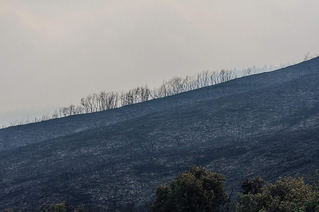 Scorched earth after the Grizzly Creek Fire moved through above Bair Ranch Thursday near Dotsero.
