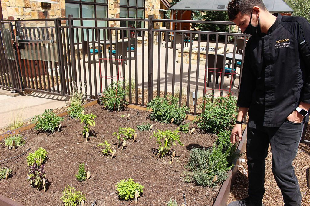 Alberto Figueroa, executive chef at the Viceroy Snowmass Resort, shows off his new patio garden on Aug. 11, 2020. (Maddie Vincent/Snowmass Sun)