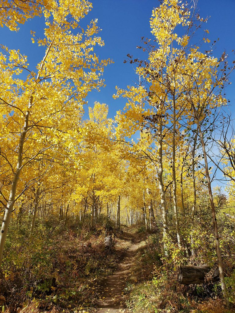 Reader Claudia Balderston enjoyed a bit of autumn glory during a Friday hike on the Elk trail.