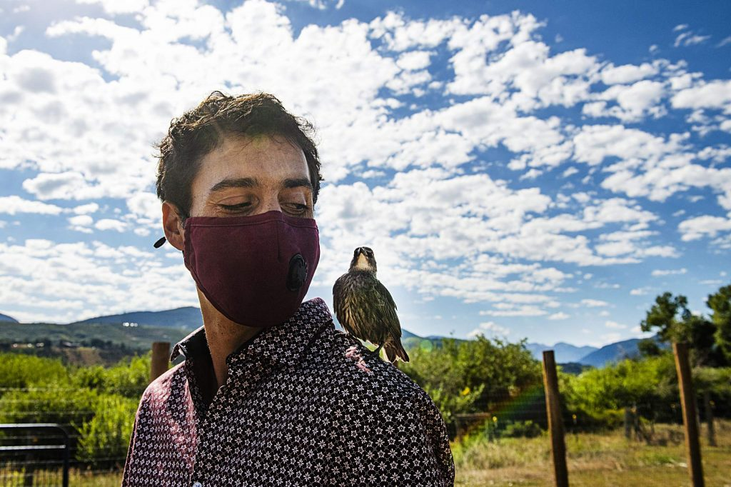 Farm Collaborative's executive director Eden Vardy looks over at the starling on his shoulder while touring the property in Aspen on Wednesday, July 29, 2020. The starling was raised on the farm and roams free, but likes to visit with people during the day. (Kelsey Brunner/The Aspen Times)