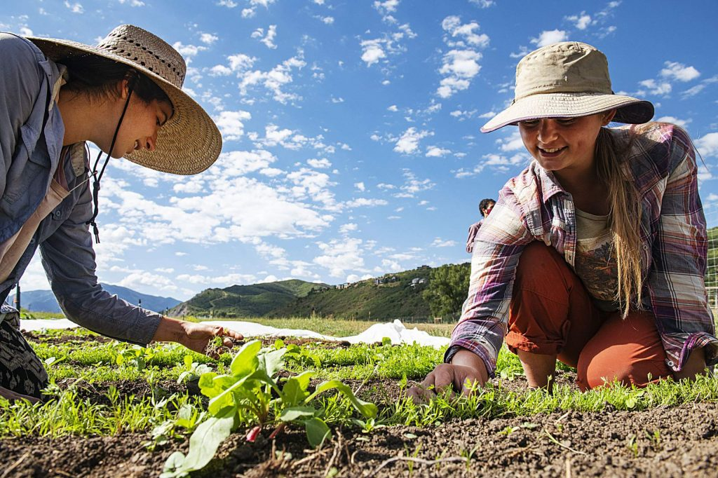 Farm Collaborative's vegetable interns Lily Kraft, left, and Ava Gilbert thin the carrots in the intern plot in the vegetable garden in Aspen on Wednesday, July 29, 2020. (Kelsey Brunner/The Aspen Times)