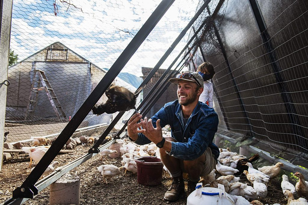 Hayden Kessel, land and livestock manager, watches as a chicken flies out of his hands in one of the coops at the Farm Collaborative in Aspen on Wednesday, July 29, 2020. (Kelsey Brunner/The Aspen Times)