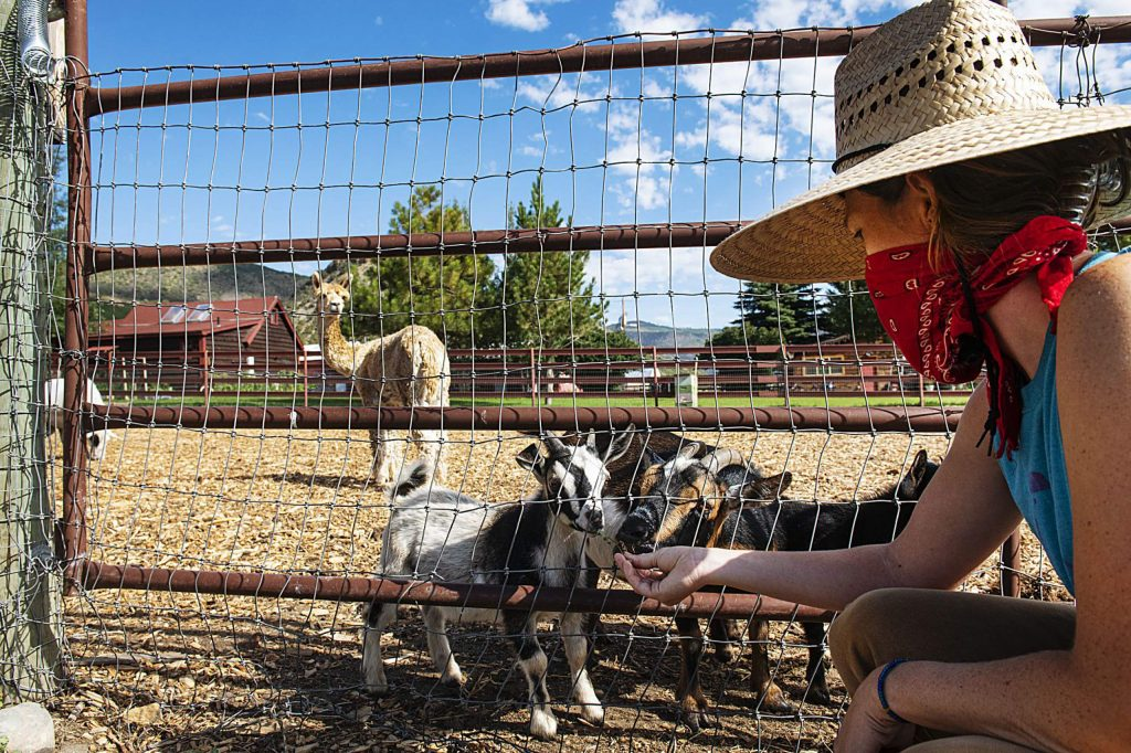 Farm Collaborative's assistant manager of production and soil, Katie Hunter, feeds the goats some weeds from outside of the pen in Aspen on Wednesday, July 29, 2020. (Kelsey Brunner/The Aspen Times)