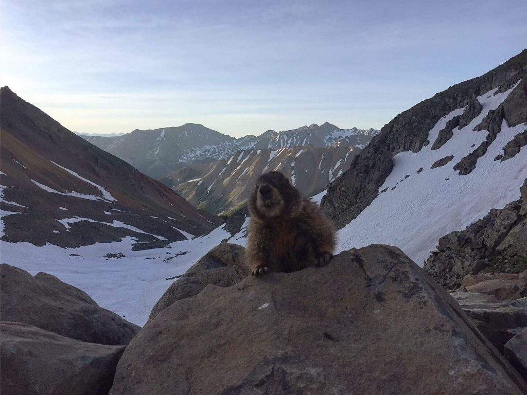 A marmot checks out a hiker on Castle Peak in July 2019. Ample snow and inaccessibility reduced hiking in June and July of 2019.