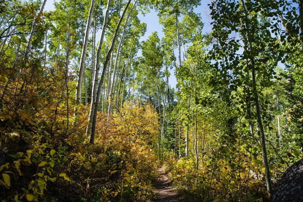 Fall foliage surrounds East Snowmass trail on Thursday, Sept. 24, 2020.