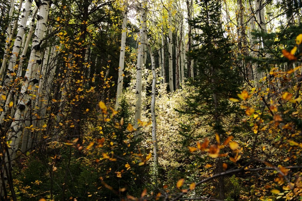 Fall foliage colors the hillside on the East Snowmass trail on Wednesday, Sept. 23, 2020.