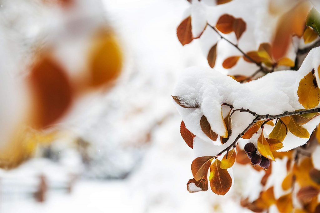 Autumn-colored leaves hold on after Aspen is blanketed in snow on Monday, Oct. 26, 2020.