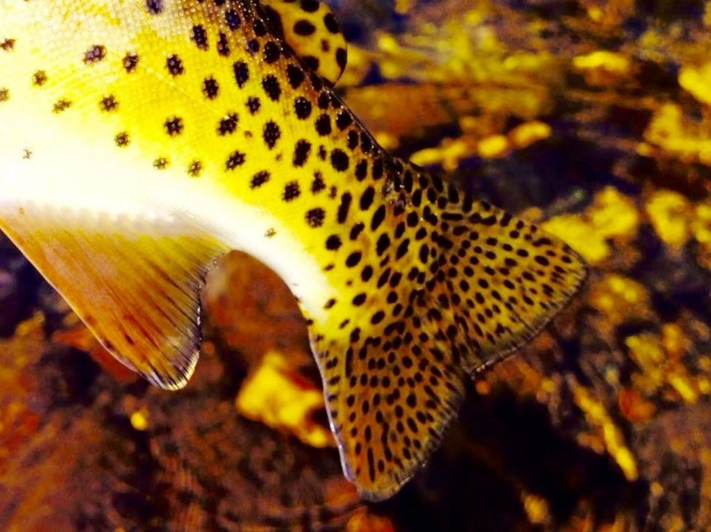 On the Fly: Solo fish photography