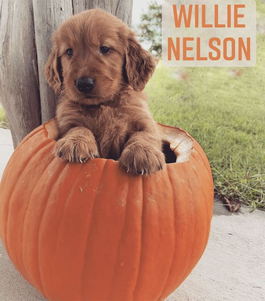 Adorable pup Willie Nelson on his first Halloween. This little guy arrives in Aspen today, Thursday November 5, to live with his new mom, Natalie Antoine.